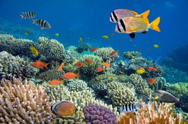 4471048-underwater-shoot-of-vivid-coral-reef-with-a-fishes