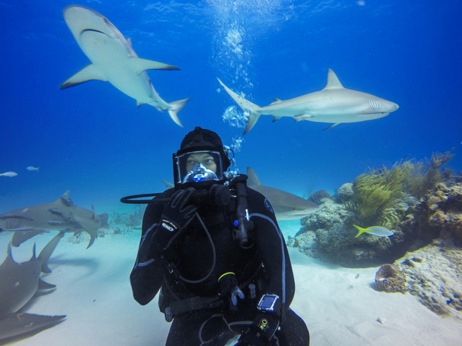 Above: GoPro athlete Jeb Corliss dives with sharks | Image source: GoPro.com