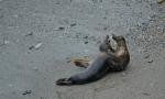 Grey Seal Wildlife Time Lapse